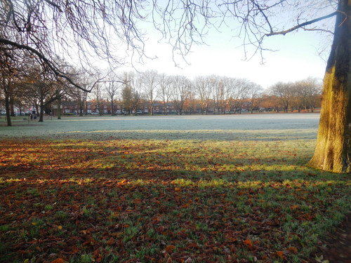 Frosty Spinneyhill Park Leicester (25)