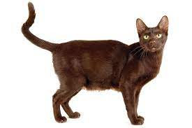 kitty three.jpg