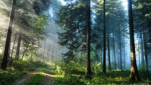 forest wallpaper 1366x768 003.jpg
