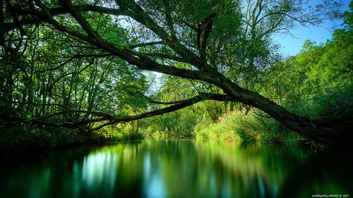 forest wallpaper 1366x768 039.jpg
