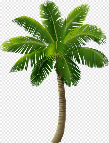 png transparent green island coconut trees green the island coconut trees.png