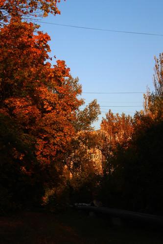 Autumn 2019 9.jpg