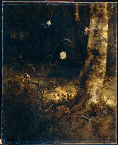 Marseus van Schrieck, Otto Лесные земли со змеей, ящерицами, бабочками и другими насекомыми, 1678, 7