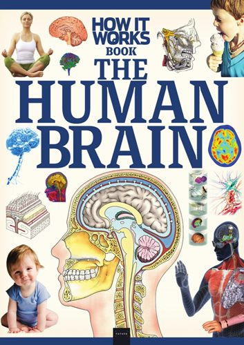 How It Works: The Human Brain