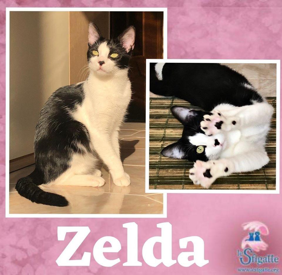 Foto di Zelda