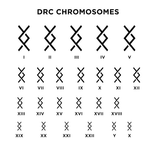 DRC Chromosomes - By Cryptographr