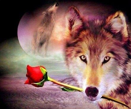 Wolf with Red Rose 441x